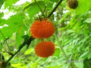 出典:http://akino-kirito.at.webry.info/200706/article_10.html