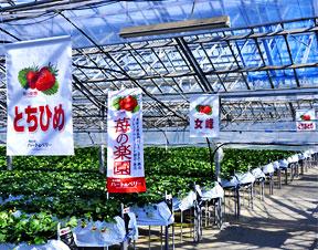 出典:http://www.heartberry.co.jp/user_data/about.php