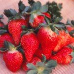 海と太陽の街、和歌山県で栽培されているいちご、その名は…?