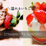 【名古屋】いちご専門店「ストロベリーハンティング」が苺好きの夢の国だった