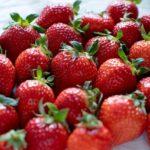 特別栽培でいちご作りに取り組む岡本農園(愛知県)取材記